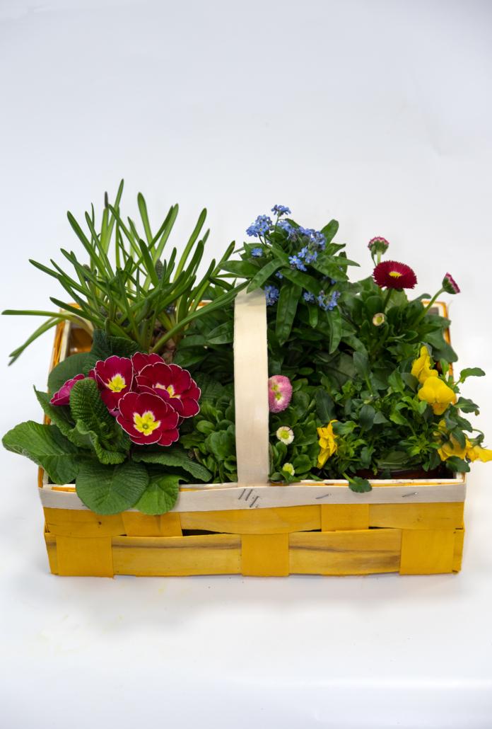 Großer Bügelkorb mit Blühern der Saison (Maße ca. 31 x 20 x 10 cm)