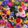Ihr Blumencenter mit Frischegarantie