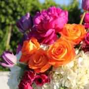 Saisonale Pflanzen und ein ganzjähriges Sortiment von Zimmerpflanzen immer frisch vom Produzenten.
